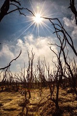 The Dead Forest (nicaldy) Tags: wood morning mountains nature forest sunrise indonesia landscape dead volcano java apocalypse disaster westjava sunray garut papandayan deadforest deadtrees