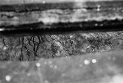 Reflection (Negerotti) Tags: japan  leicam3 kanagawaprefecture  hektor73cmf19 rolleisuperpan200 odawaracity rolleisupergrain