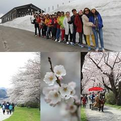 ไม่ง่ายนักที่ภายในหนึ่งวันเราจะได้พบกับซากุระที่สวนเท็นโชจิ-คิตะคามิและกำแพงหิมะ-ฮาชิมันไต Perfect trip #โลกใบใหม่ออนทัวร์ #โลกใบใหม่ #อิฌพาแฟนคลับเที่ยว