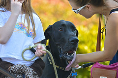 Licked (swong95765) Tags: family woman dog girl tongue child bokeh mother lick greatdane