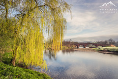 Lazonby Bridge (.Brian Kerr Photography.) Tags: tree yellow cumbria edenvalley landscapephotography rivereden lazonby briankerrphotography lazonbybridge sonyuk a7rii