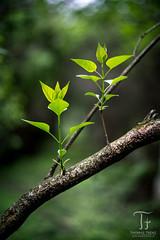 New Life (Thomas TRENZ) Tags: vienna wien life green nature 50mm austria nikon power energie natur grow development leben kraft d600 wachstum trenz sterreich grn thomastrenz