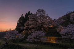 51Butsuryuji Temple (anglo10) Tags: sunset japan cherry temple