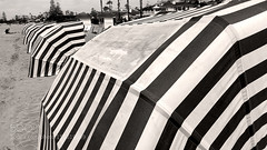 Striped Conopies (southjerseseyhvac) Tags: california old summer vacation sun white black classic beach fashion sepia del relax hotel coast sand san pattern antique stripe diego row canvas cover hood fade cloth canopy coronado hospitality