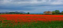 Poppies near Palau-Sator (Meino NL) Tags: poppies costabrava klaprozen palausator