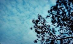 IMG_20160419_020820 (sahilasanzana) Tags: nature silhouette skyscape bright bluesky shadesofblue dhakasky