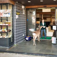 myajima-1560-ps-w (pw-pix) Tags: morning people woman japan shop restaurant funny hiroshima deer miyajimaisland entry itsukushima myajima miyajimaguchi goingin hiroshimabay openedautomaticdoors