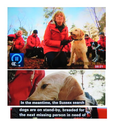 2016_01_160001 - breaded search dogs