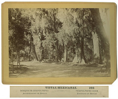 Bosque de Chapultepec (SMU Central University Libraries) Tags: trees parks evergreens cypresses chapultepecpark