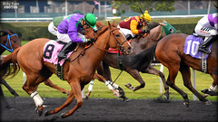 Hopes Love @ Golden Gate Fields (billypoonphotos) Tags: california horses horse news love hope golden bay photo nikon gate san francisco track picture racing stretch chrome hopes area fields ricardo hudson gonzalez synthetic thoroughbred debut coburn 2016 tapeta d5200 billypoon billypoonphotos hopeslove