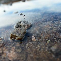 _DSC5210.jpg (cmayart88) Tags: mountain plant reflection water ga landscape rocks outdoor arabia decatur granite arabiamountain diamorpha