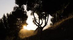 Un mundo mejor. 13/366 (Roberto Macaya M) Tags: chile parque naturaleza sol canon arbol la natural negro sombra paisaje pisa amarillo t5 365 monte 1855 roca papeles 2016 366 pastizal talahuano 1200d