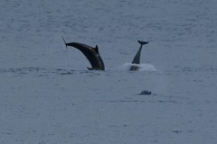 IMG7_22218 (walter.innes) Tags: walter mouth harbour aberdeen dolphins innes