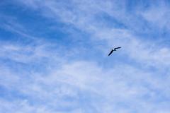 GAVINA (Bernat Nacente) Tags: blue sky lake bird de 50mm nikon f14 cel catalonia melody catalunya mm blau nikkor 50   pla  gavina banyoles  lestany ocell nohdr   d7200