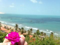 IMG_1344 (Roberta Arrais) Tags: life brazil flower love praia brasil flor free soul livre brach brazillian