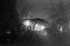 through the woods (Beau Finley) Tags: city winter light blackandwhite monochrome weather fog night dc washington districtofcolumbia february atnight clevelandpark beaufinley