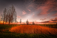 Last Sunlight, First Moonlight And The Squadrons (Alfred Grupstra Photography) Tags: trees light sky green reed nature grass clouds landscape nikon nederland nl noordholland oostwoud