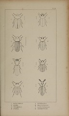 n210_w1150 (BioDivLibrary) Tags: greatbritain insect bugs beetles arthropoda californiaacademyofsciences coleoptera taxonomy:order=coleoptera colorourcollections bhl:page=39307006 dc:identifier=httpbiodiversitylibraryorgpage39307006 bhlarthropod
