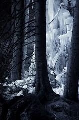 soffio (lauretta michelutti) Tags: alberi bianco magia ghiaccio