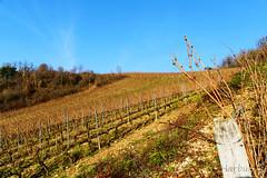 Domaine viticole TISSOT (cedric.harbulot) Tags: light france landscape vineyard nikon wine lumière sigma vine vin paysage campagne vignoble vigne raisin 18250mm d5300