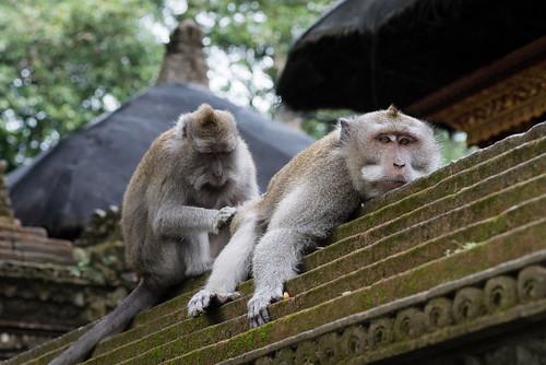 Monkey Forrest Spa