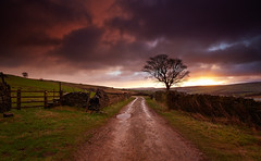 Stormy Wessenden Sunrise (Chris Nickerson) Tags: winter storm cold tree wet clouds sunrise canon landscape peakdistrict westyorkshire holmfirth huddersfield wessendenmoor 16mm35mmf4