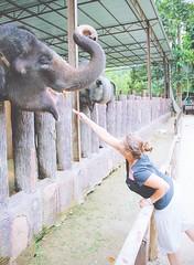 Malaysia   by It's Travel O'Clock (DaphneGroeneveld) Tags: travel tourism nature its animal wildlife malaysia borneo welfare oclock