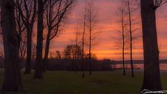 zonsopgang bij Kralingse plas (dorsman1970) Tags: winter water rotterdam meer nederland natuur gras lucht zon landschap tegenlicht zonsopgang kralingsebos kralingseplas