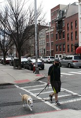 A boy and his dog. (ktmqi) Tags: urban dog buildings newjersey walker hoboken hudsonstreet hudsoncounty