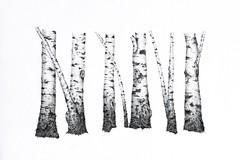 e09 (Karwik) Tags: trees tree pencil pencils drawing drzewo owek rysunek drzewa brzoza brzozy olowek