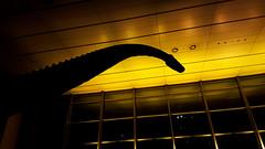 Night at the Commerzbank (jadzia0410) Tags: tower silhouette deutschland hessen dinosaur frankfurt foyer frankfurtammain commerzbank diplodocus senckenberg diplodocuslongus