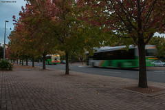 Buses and Autumn Leaves in Woden (kommissar_todd06) Tags: autumn action autumnleaves canberra phillip act woden actgovernment wodentowncentre actionbuses wodenact transportforcanberra busesincanberra transportincanberra territoryandmunicipalservices transportcanberra