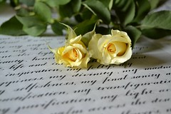 Love Letter (Ayeshadows) Tags: roses two love leaves yellow writing handwriting vintage branches letter lovely