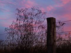 After sunset at the fence_c (gnarlydog) Tags: sunset sky purple australia manualfocus silhoutte fencepost fenceline adaptedlens cintagon40mmf28 refittedlens