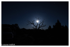 Spread of Life (chagingmind) Tags: moon lonetree treemoonlight