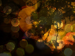 Appreciate Nature & Your Surroundings (soniaadammurray - SLOWLY TRYING TO CATCH UP) Tags: trees sky sun abstract love nature manipulated hearts experimental bokeh master quotes rembrandt choose digitalphotography laotzu nohurry accomplish