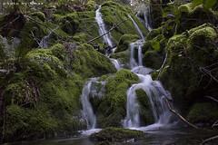 _MG_7558 (kmax) Tags: forest waterfall spring hiking saltspringisland saltspring fallingwater