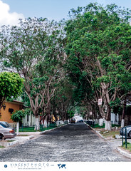 Trees covering a street in Antigua Guatemala. (Vincent Demers - vincentphoto.com) Tags: voyage road street city trip travel trees urban latinamerica town colorful guatemala unescoworldheritagesite cobblestone antigua arbres colonialarchitecture gt rue ville centralamerica color urbain travelphotography amriquelatine antiguaguatemala urbanscene travelphoto spanishculture sacatepquez laantigua colonialstyle stylecolonial traveldestination scneurbaine photographiedevoyage amriquecentrale photodevoyage architecturecoloniale travellocation destinationvoyage cultureespagnole sitedupatrimoinemondialdelunesco ruedepierre