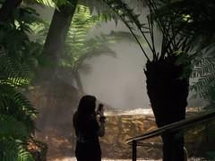 Rain forest, Australian National Botanic Gardens (BRDR images) Tags: rainforest australia canberra australiancapitalterritory australiannationalbotanicgardens photoecology ourfragileearth