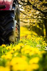 IMG_8717.jpg (vossemer) Tags: de deutschland jahreszeiten natur pflanzen blumen verkehr traktoren frhling blten trecker niedersachsen lwenzahn jork frhjahr