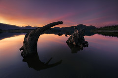 What Lies Beneath (jasonfdarr) Tags: water vancouver sunrise reflections driftwood mountians stavelake jasondarr