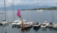 20150527_131219LC (Luc Coekaerts from Tessenderlo) Tags: flower public sailboat landscape nobody greece creativecommons corfu kerkyra eastcoast vak grc sailingboat forground liston cc0 coeluc vak201505corfu