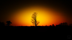 The lonely tree, 2016 edition (emrold) Tags: sunset tree yellows reds splittone xf35mmf14r fujifilmxt1 2016emrold|ericdelorme
