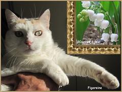 Mouna dans les mains de Phil vient vous souhaiter un heureux 1 Mai (Figareine- Michelle) Tags: 1 chat mai muguet