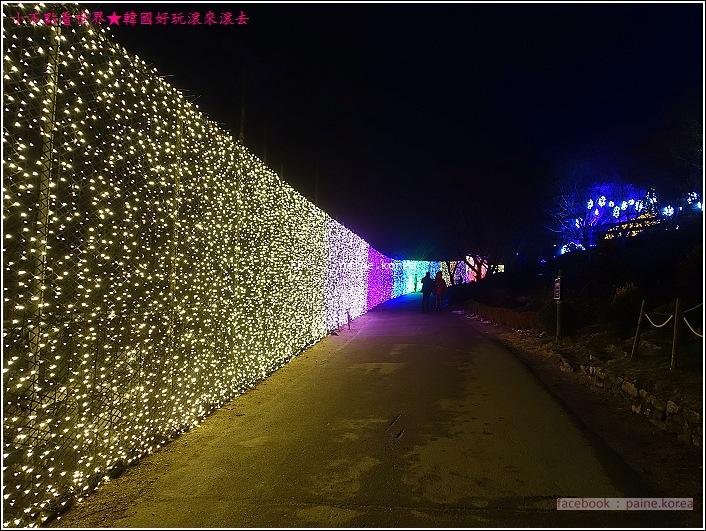 晨靜樹木園 五色星光庭園展 (55).JPG