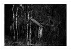 Shack (shaun.argent) Tags: trees winter building tree texture nature woodland woods ruins seasons birch shaunargent