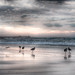 2016 begins (nosha) Tags: ocean california ca sea usa bird beautiful beauty newyear asilomar avian 2016 nosha