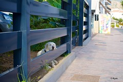 Doggy (Kym.) Tags: street dog fence walking spain walk doggy andalusia nerja thegang andalucia otherpeoplesgang