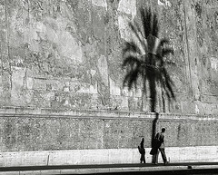 Oasis (Alessio Trerotoli) Tags: life street city shadow people urban blackandwhite rome roma wall photography photo palm oasis bnw