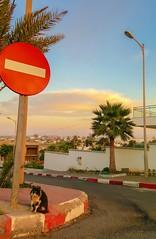 sid el abed in Rabat (akram elhadi) Tags: sky beach cat ky samsung morocco rabat susnet temara